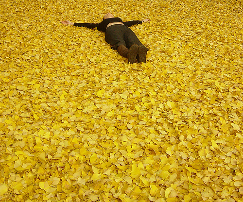 woman laying face up on ground blanketed with gold leaves