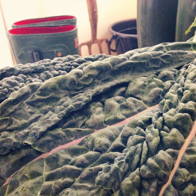 A kitchen still life moment - this corner full of greens caught my eye #kitchenfun #stilllife #organicgarden #organiclife #trailblazingwellness #kale #wellies #adaptivegardening #disability #foodthatheals #greenjuice #igerswales