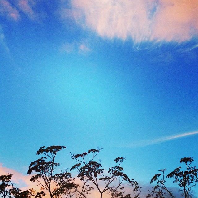 I love the space in between #bluesky #wales #fennelplants #autumn #wwoa #igerswales #myview
