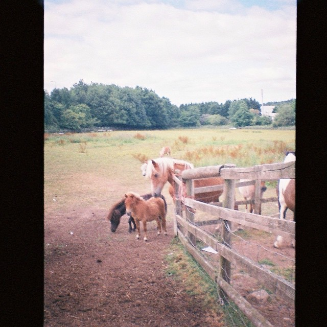Just got my #dianamini #dianacamera #lomography films developed. Such a joy to remember all those shots & adventures. Yes, there are plenty of ponies #equinefacilitatedpsychotherapy #ponypictures #horses #trailblazingwellness cc. @dyanavalentine & @beyondthearena for equine adoration ??♥️& gratitude to @galadarling for inspiring me to get a Diana Camera in the first place!