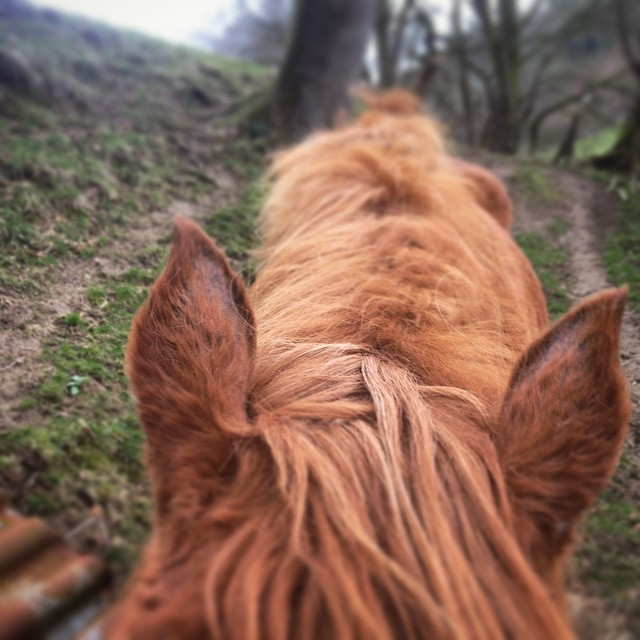 'The breath of heaven is found between a horses's ears' #horses #healing #equine #equinefacilitatedpsychotherapy #healingjourney #trailblazingwellness #grooming #horselove #horsetime #horsehugs
