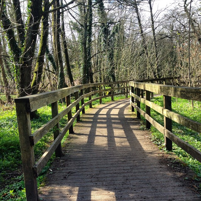 What paths are opening for you today? Can you see the shadows with the sunshine? Wishing you good navigation on your journey. #latergram #igerswales #healingjourney #trailblazingwellness #adventure
