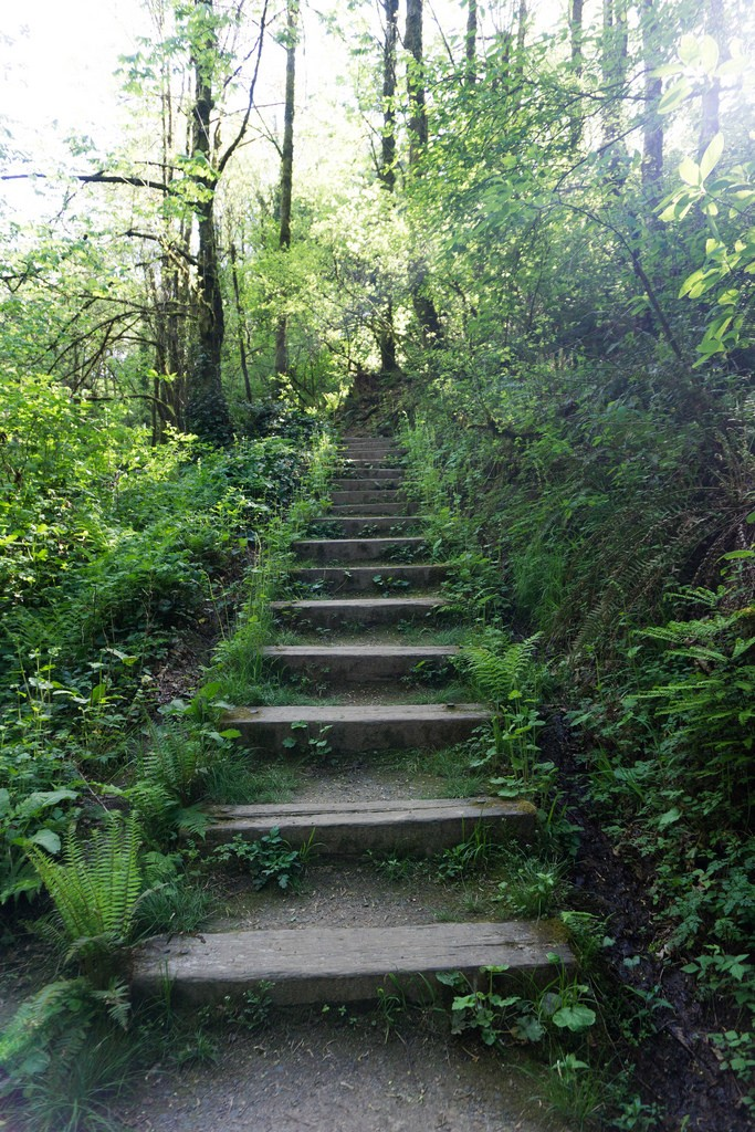 Wooden path - Trailblazing Wellness: How I Designed My Own Liberation