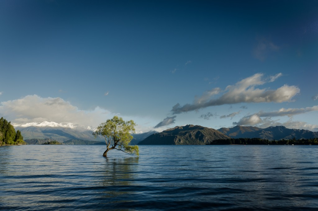 tree emerging from water in a flood - Surfing the Emotional Surges: How to Cope When Feeling Overwhelmed