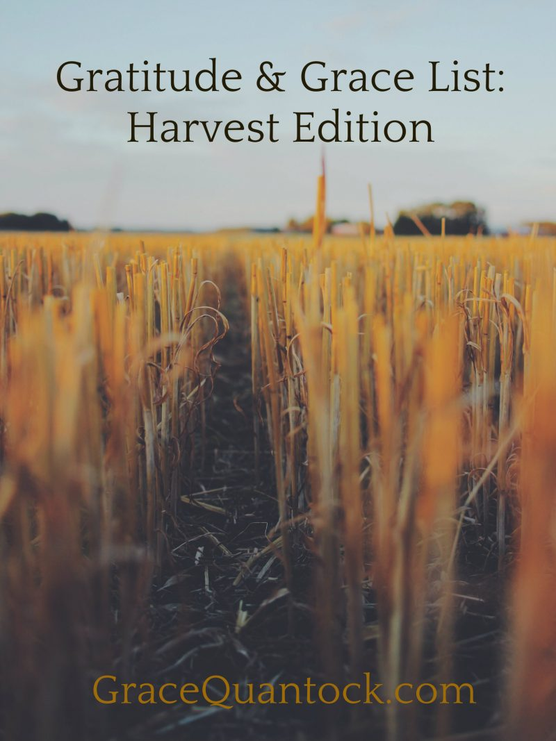 a field of wheat with a path through it, text: gratitude & grace list: harvest edition