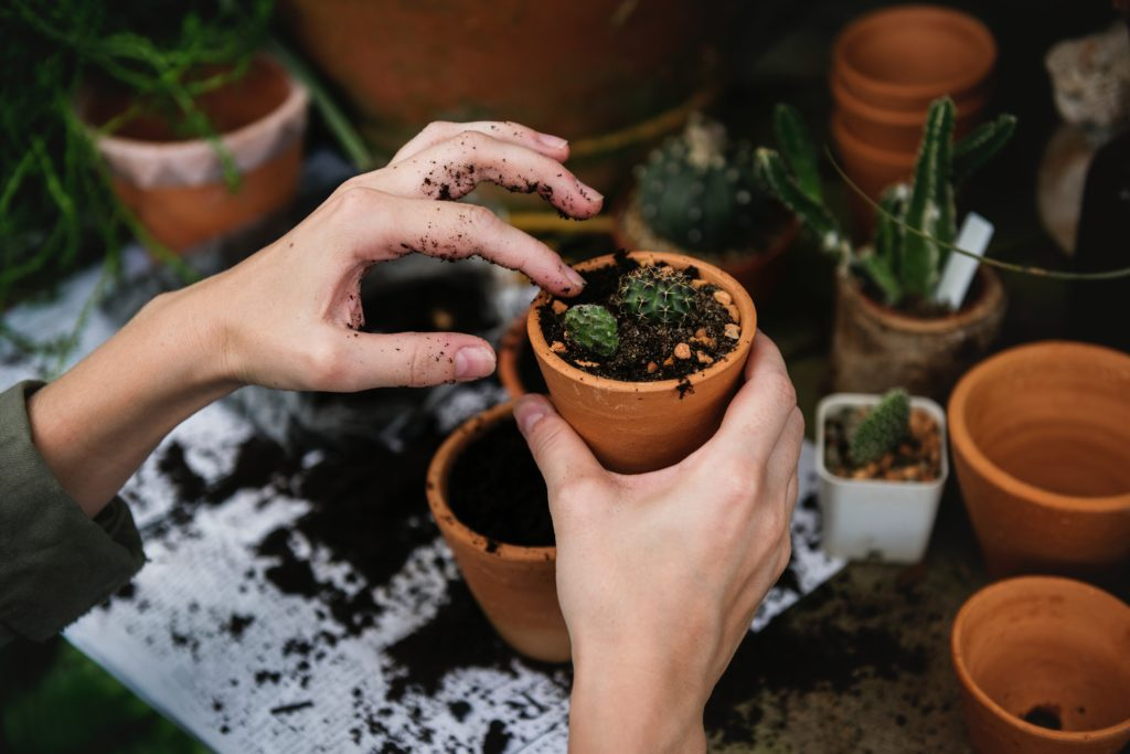 A person potting a small green plant above a potting table with pots, earth and plants on it