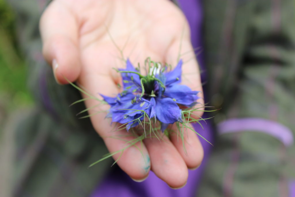 A blue flower held in Grace's hand, close up picture.